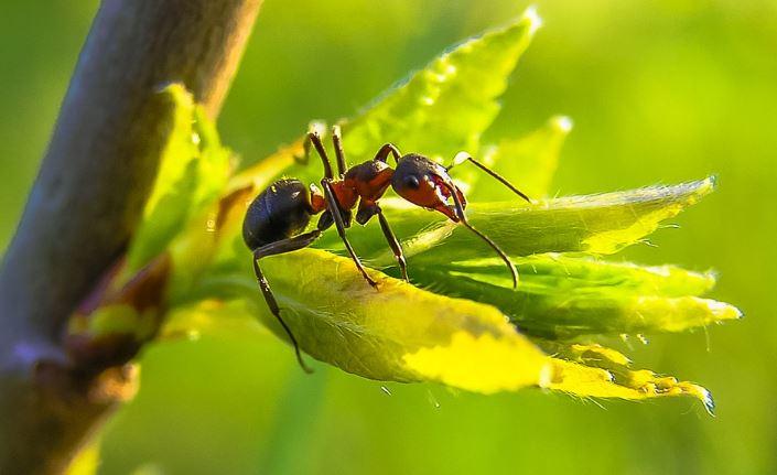 Comment repousser naturellement les fourmis de la maison - Comment eradiquer les fourmis ...